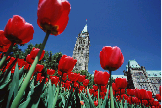 festival canadien des tulipes ottawa